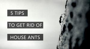 5 Formas de Deshacerse de las Hormigas en la Casa: Métodos Naturales y Convencionales