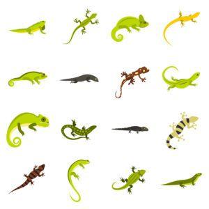 Iconos de lagarto plano en el blanco.