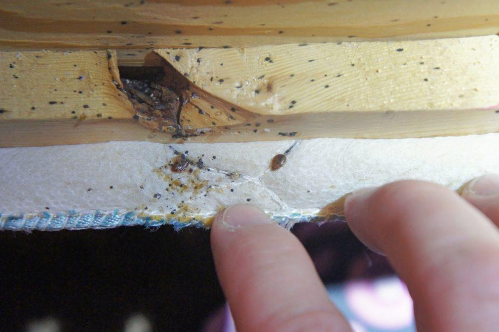 Plagas de insectos en la cama