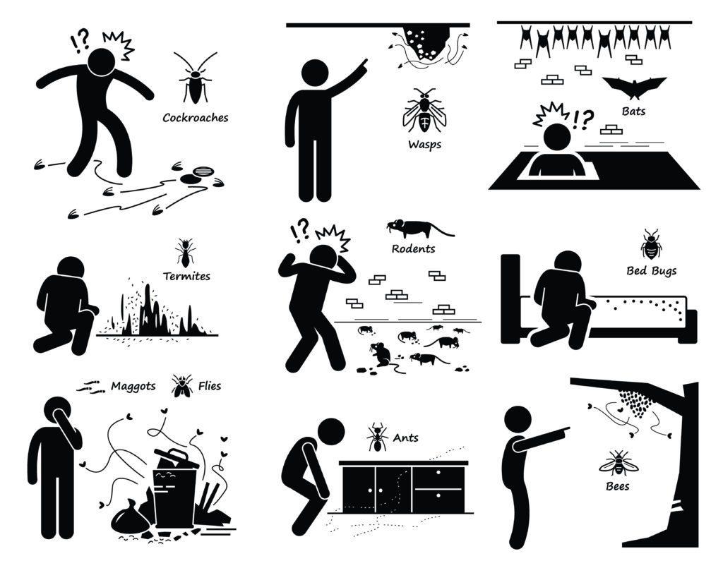 Los diferentes puntos dañinos causados por cucarachas