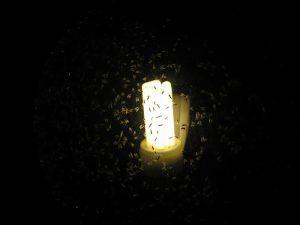insectos alrededor de la luz