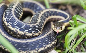 Primer plano de una serpiente de la liga