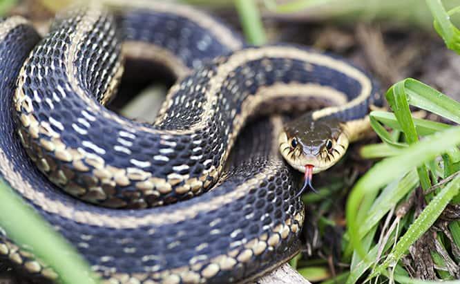 14 Consejos para Deshacerse de las Serpientes