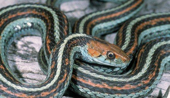 15 Preguntas y Respuestas sobre los Hechos de la Serpiente de la Liga