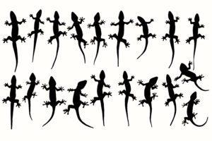 Vector siluetas de lagartos, geckos en el blanco.