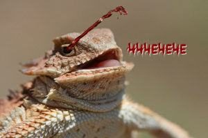 Imagen divertida de la sangre de lagarto cornudo chorros.