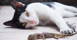 Gato atrapando lagarto y protegiéndolo de los demás.