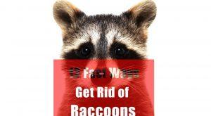 Deshacerse de los mapaches