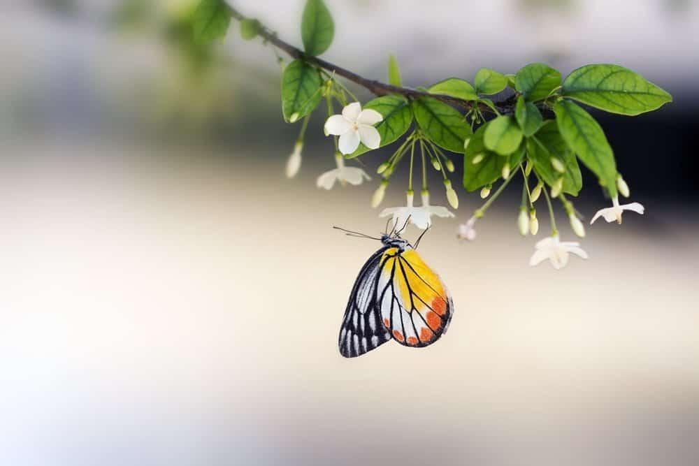 10 Datos Interesantes Sobre las Mariposas y Su Ciclo de Vida en Detalle