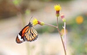 Las Mariposas Frente a la Polilla: una Explicación Detallada Sobre Su Ciclo de Vida y Su Vida útil