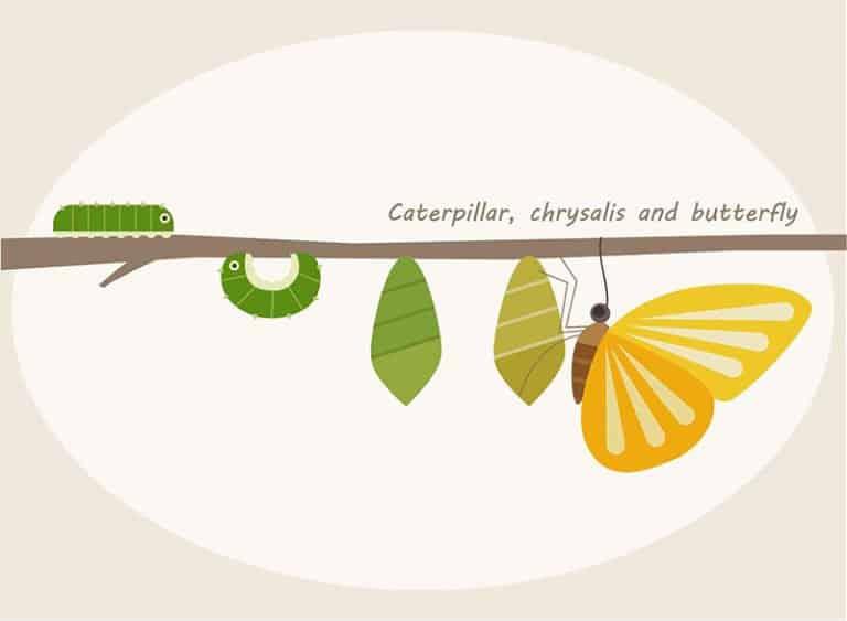dibujo animado de mariposa en la naturaleza