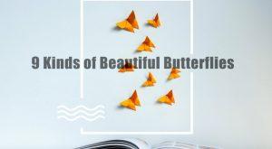 9 Tipos de Hermosas Mariposas en el Mundo 2018