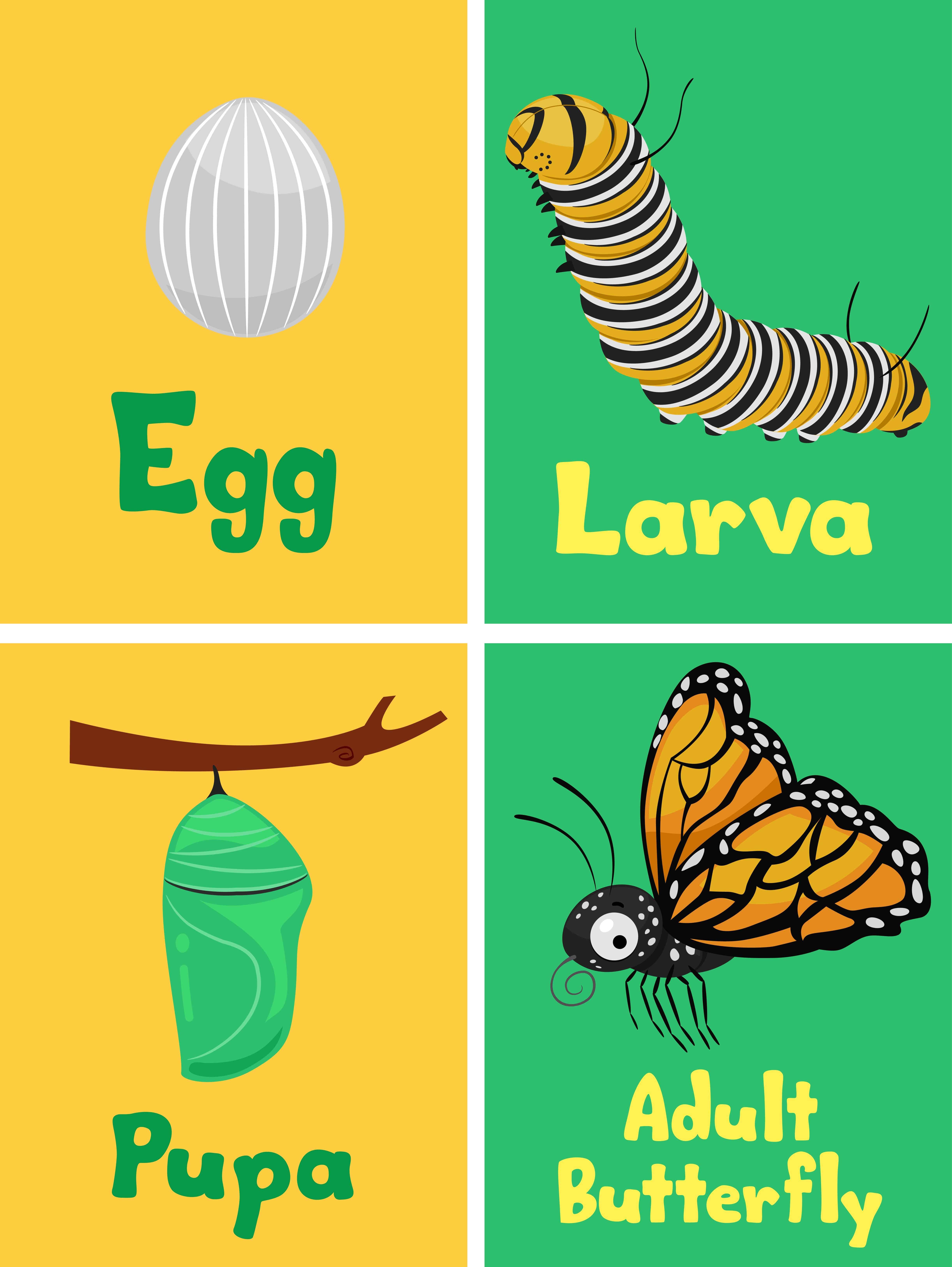 dibujo animado de mariposas
