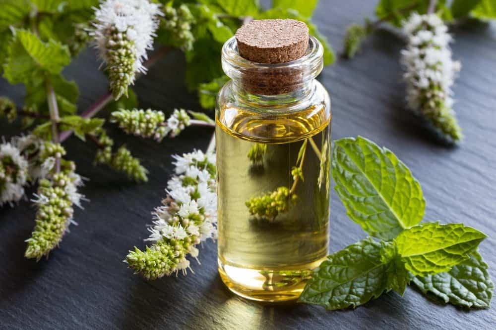 Aceite de menta fresco con hojas sobre la mesa