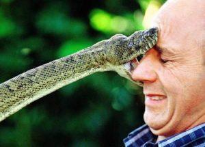 Una serpiente está mordiendo la cara de un hombre