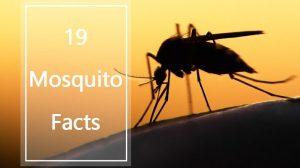 hechos del mosquito