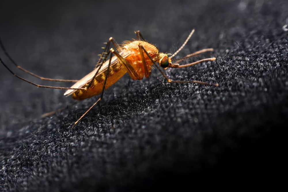 Reseñas de Ropa Repelente a Mosquitos: ¿Funciona Realmente?