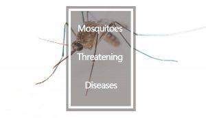 Mosquitos que amenazan las enfermedades