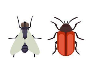 Mosquito y escarabajo en el blanco.