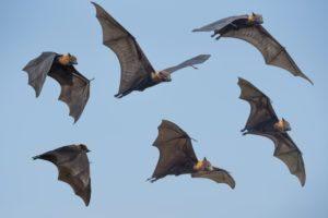 Varios murciélagos volando en el aire.