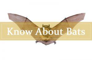 Acerca de los murciélagos