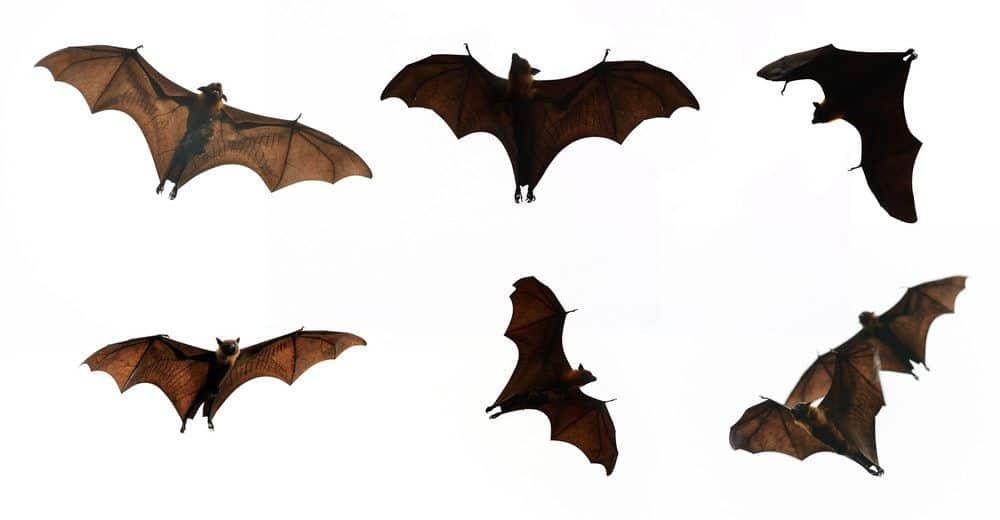 13 Recursos Efectivos en el Hogar para Deshacerse de Murciélagos