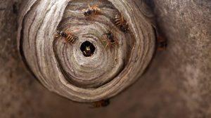 nido de abejas con un montón de abejas