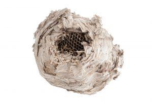 nido de avispas aislado sobre fondo blanco.