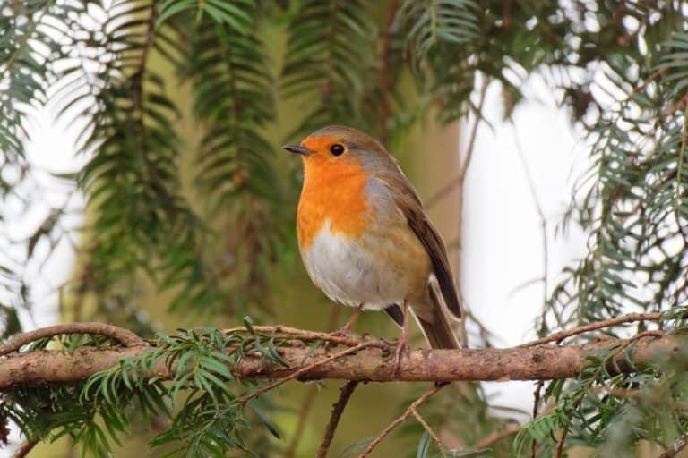 un lindo pájaro en la rama.