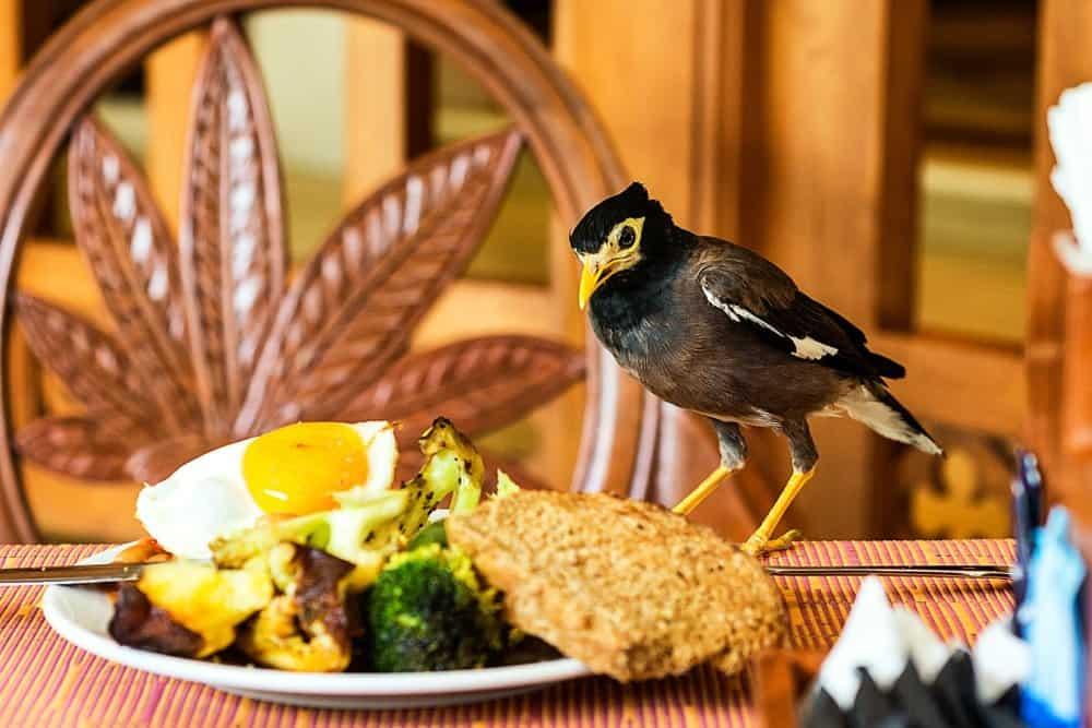 Un pájaro está tumbado en la mesa y mirando la comida