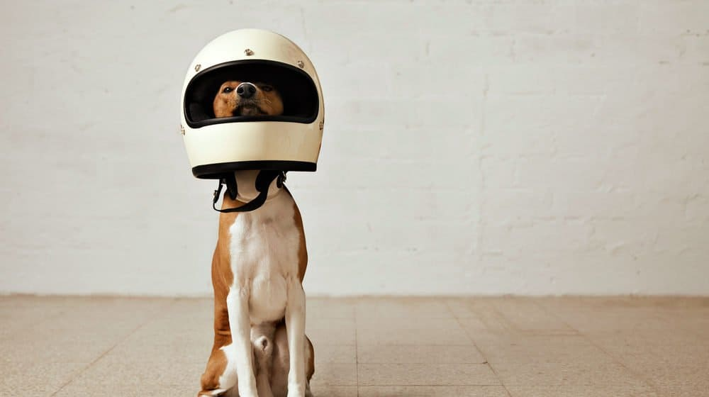 El perro lleva un sombrero de astronauta