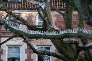 Picos de pájaro en los árboles