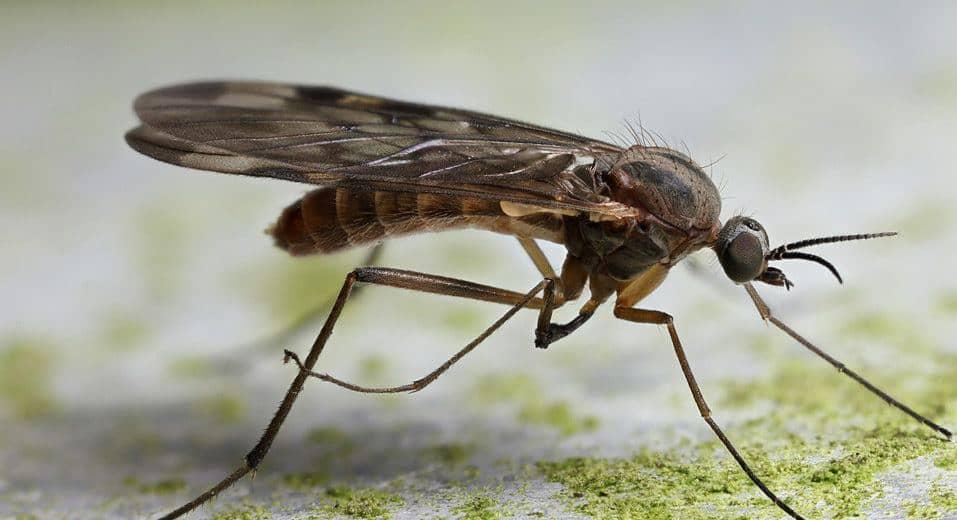 Mosquitos: 27 Hechos Rápidos, 5 Tipos Comunes y Problemas de el Mosquito