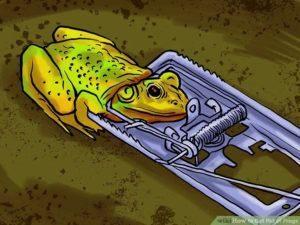 Trampa para ranas