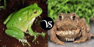 Diferencia entre ranas y sapos