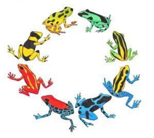Veneno dardo ranas en un círculo sobre el blanco.
