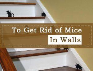 Cómo Deshacerse de los Ratones en las Paredes: 2 Formas Rápidas y Fáciles de Trabajar