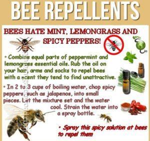 información específica sobre cómo hacer un repelente de abeja DIY