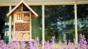 repeler las plantas de abejas