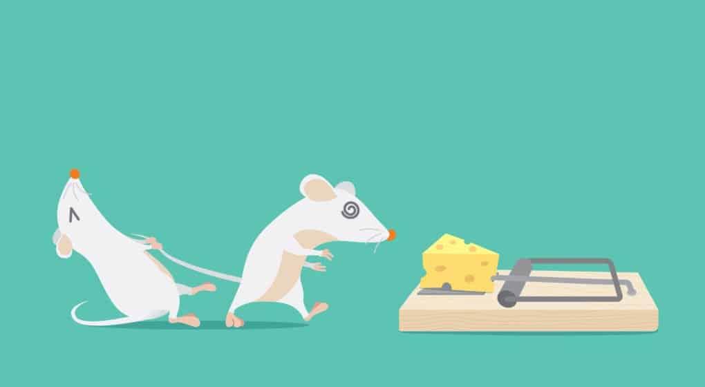 5 Trampas de Ratón Caseras Fáciles (DIY)