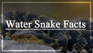 Datos de serpiente de agua