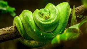 12 Repelentes Caseros de Serpientes y Formas Naturales de Repeler Serpientes