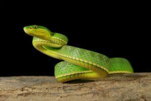 Una serpiente verde en el fondo oscuro