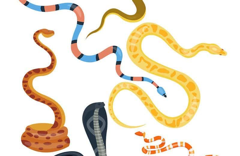 7 Datos de Serpiente Víbora y 5 Tipos que Nunca Aprendiste en la Escuela