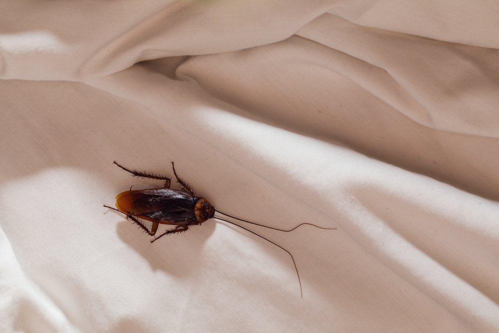 Una cucaracha está en la tela