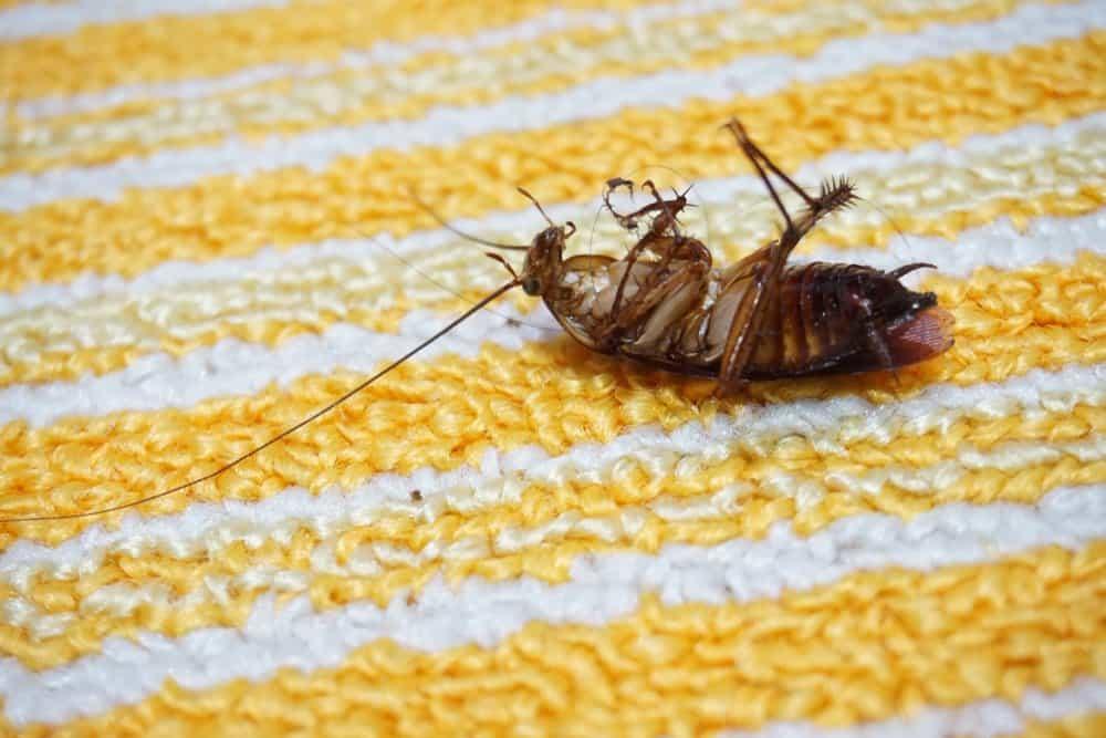 Una cucaracha muerta está tirada en el suelo amarillo