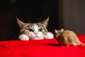 10 Mejores Formas de Controlar la Infestación de Ratones (en Casa)